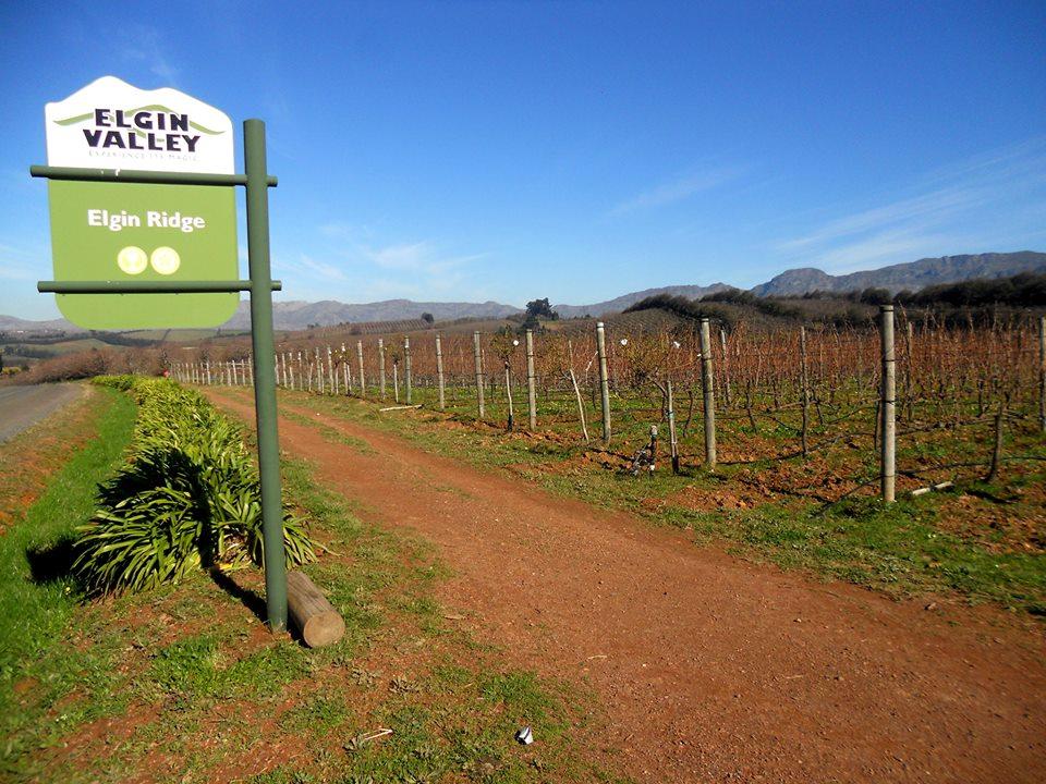 Elgin Ridge Wines