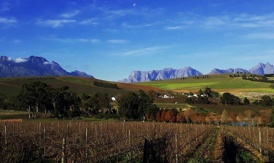 Clos Malverne Wine Estate